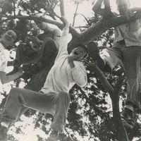 151-Yeah-Tree.jpg